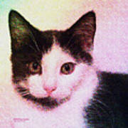 Confetti Kitty Art Print