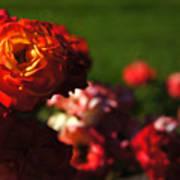 Confetti Roses Art Print