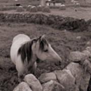 Connemura Horse-signed-#300 Art Print