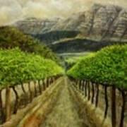 Constantia Uitsig Vines Pleine Aire Art Print