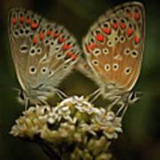 Contact - Detail Of The Butterflies Art Print