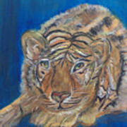 Contented Tiger Art Print