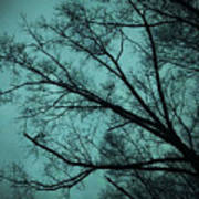 Contrasted Trees Art Print