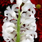 Contrasting Red And White Flowers Art Print