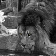 Cool Drink Of Water  Black And White  T O C Art Print