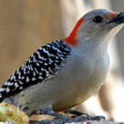 Cool, Woodpeckers Like Sunflower Seeds Art Print