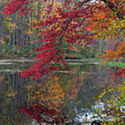 Cooper Mill Pond Art Print