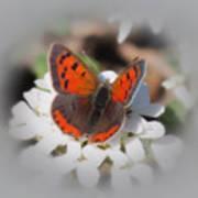 Copper Glow - Butterfly Art Print