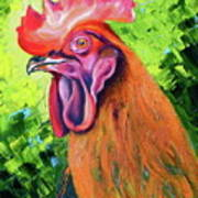 Copper Maran French Rooster Art Print