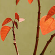 Copper Plant 2 Art Print