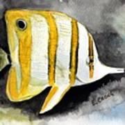 Copperband Butterflyfish  Art Print
