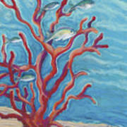 Coral Assets Art Print