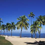 Coral Coast Palms Art Print