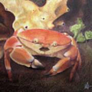 Coral Crab Art Print