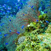 Coral In Truk Art Print