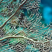 Coral Texture Art Print
