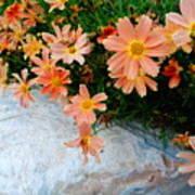 Coreopsis Sienna Sunset Art Print