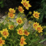 Coreopsis Tickseed Art Print