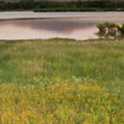 Corepsis Blooming At The Quanah Parker Lake Art Print