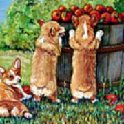 Corgi Apple Harvest Pembroke Welsh Corgi Puppies Art Print by Lyn Cook