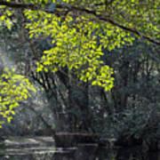 Corkscrew Swamp - In The Autumn Art Print