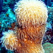 Corky Sea Finger Coral - The Muppet Of The Deep Art Print