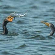 Cormorant Fish Fight Art Print