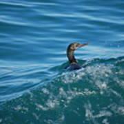 Cormorant In The Water Art Print