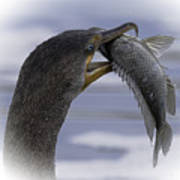 Cormorant's Whopper Dive Catch Art Print