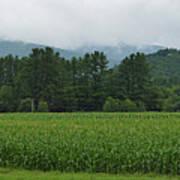 Corn Among The Mountains Art Print