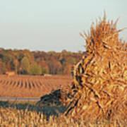 Corn At Harvest Art Print