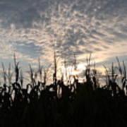 Corn At Sunrise Art Print