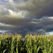 Corn Field Beform Storm Art Print