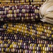 Corn Kernals Art Print