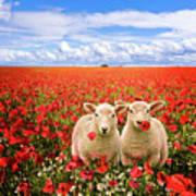Corn Poppies And Twin Lambs Art Print