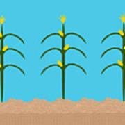 Corn Rows Art Print