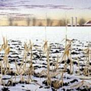 Cornfield In Winter Art Print
