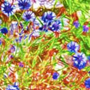 Cornfield With Cornflowers Art Print