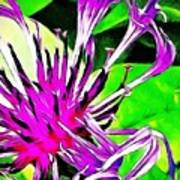 Cornflower  Art Print