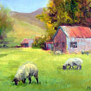 Coromandel New Zealand Sheep Art Print