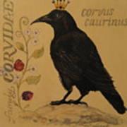Corvus Caurinus Art Print