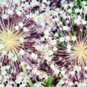 Cosmic Blooms Art Print