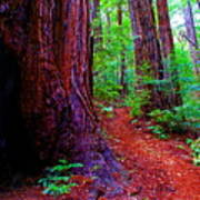Cosmic Redwood Trail On Mt Tamalpais Art Print