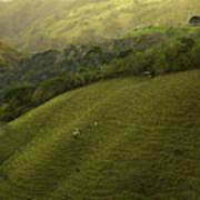 Costa Rica Pasture Art Print