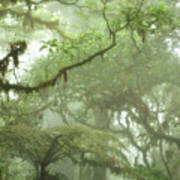 Costa Rican Cloud Forest Print by Matt Tilghman