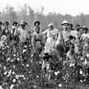 Cotton Planter & Pickers, C1908 Art Print