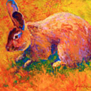 Cottontail I Art Print by Marion Rose