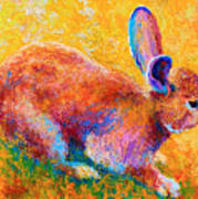 Cottontail II Art Print