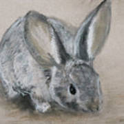 Cottontail Rabbit Art Print