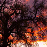 Cottonwood Sunset Silhouette Art Print